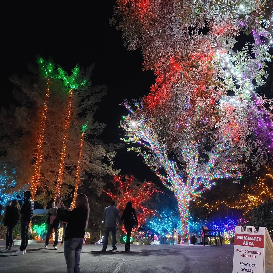 Phoenix Zoo Lights az