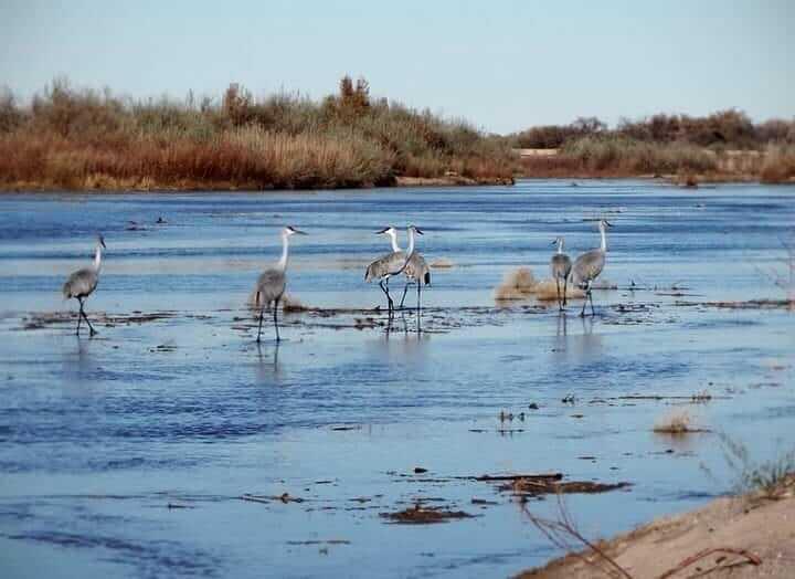 Rio Grande Nature Center wildlife