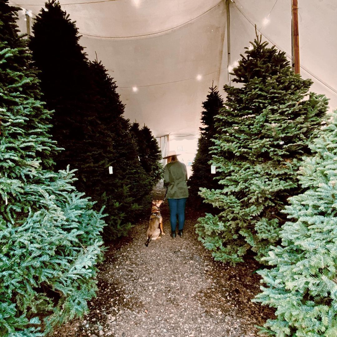 Valley View Christmas Trees best Christmas Tree Farms in Arizona
