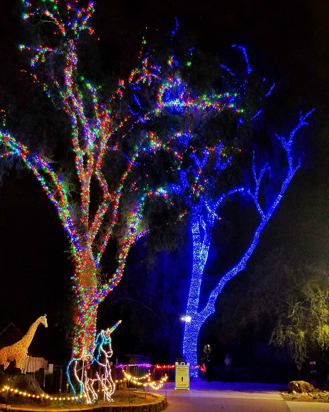 ZooLights Walk Thru arizona